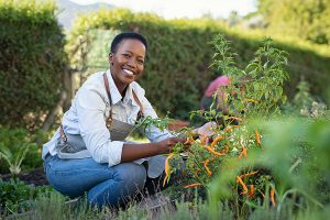 summer vegetable gardens